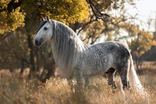 White Horse on Brown Grass Field