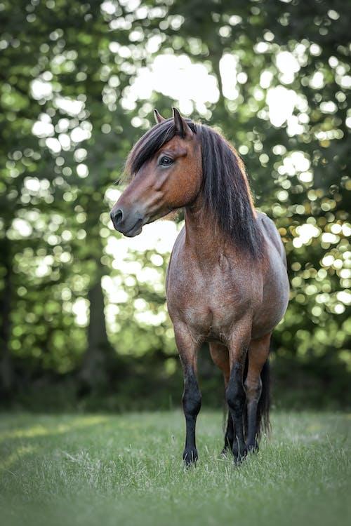 Brown Horse Standing on Green Grass Field