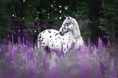 White Horse with Black Spots