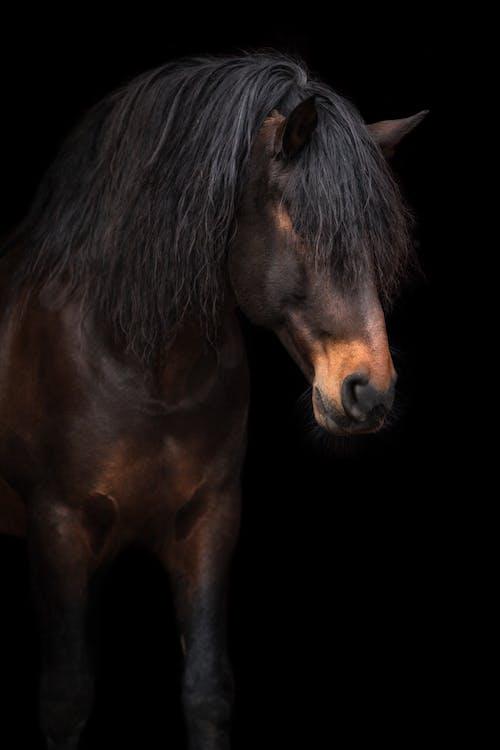 Brown and Black Horse Illustration