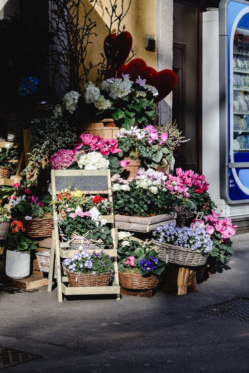Assorted Flowers Displayed on the Street