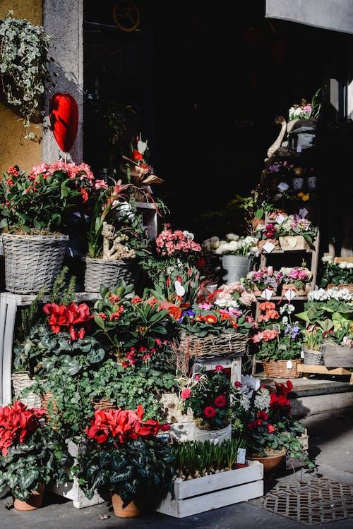 Fotobanka sbezplatnými fotkami na tému displej, flóra, kvety