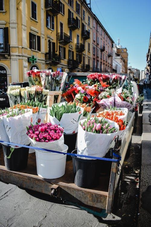 Czerwony I Zielony Bukiet Kwiatów Na Niebieskim Plastikowym Wiaderku