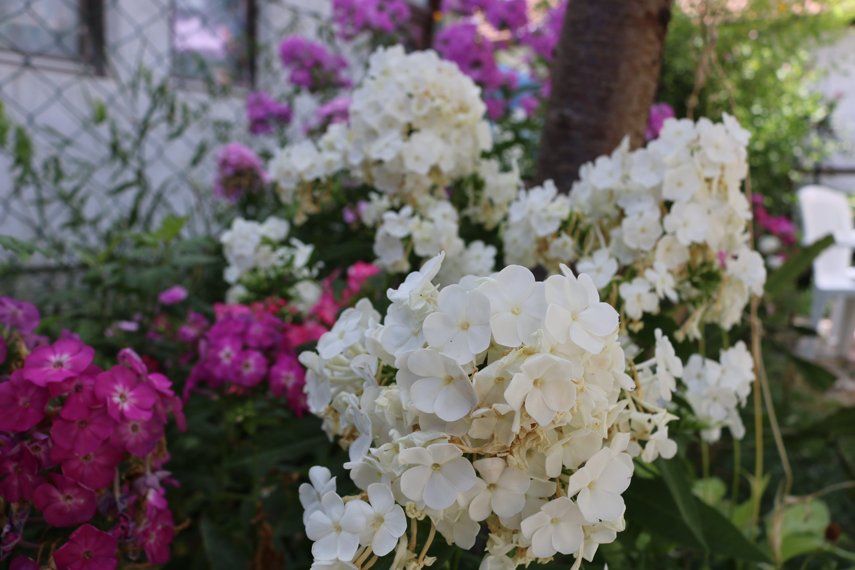 Free stock photo of calm, city, flowers, garden