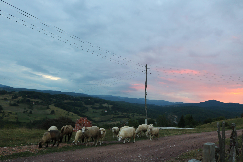 Free stock photo of animal, blue, evening sun, farm