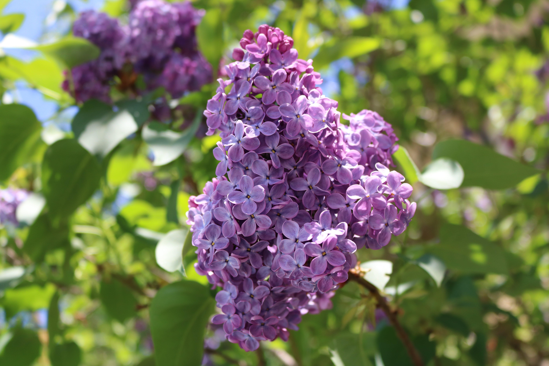 Free stock photo of day, flower, flower wallpaper, flowers