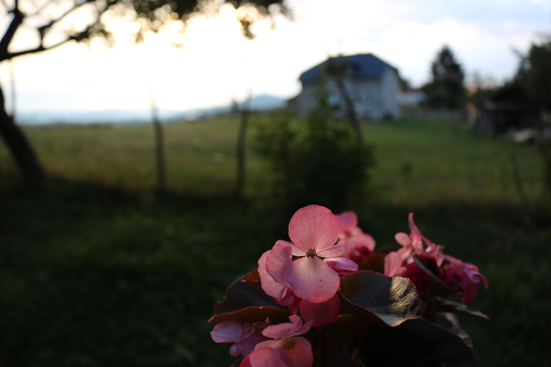 Free stock photo of bright, evening sun, flower, light