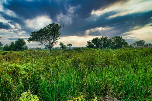 Scenic landscape of green meadow and trees under clouds