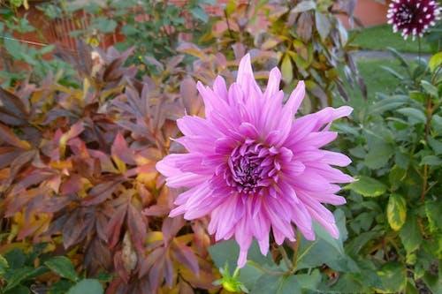 Photos gratuites de fleur