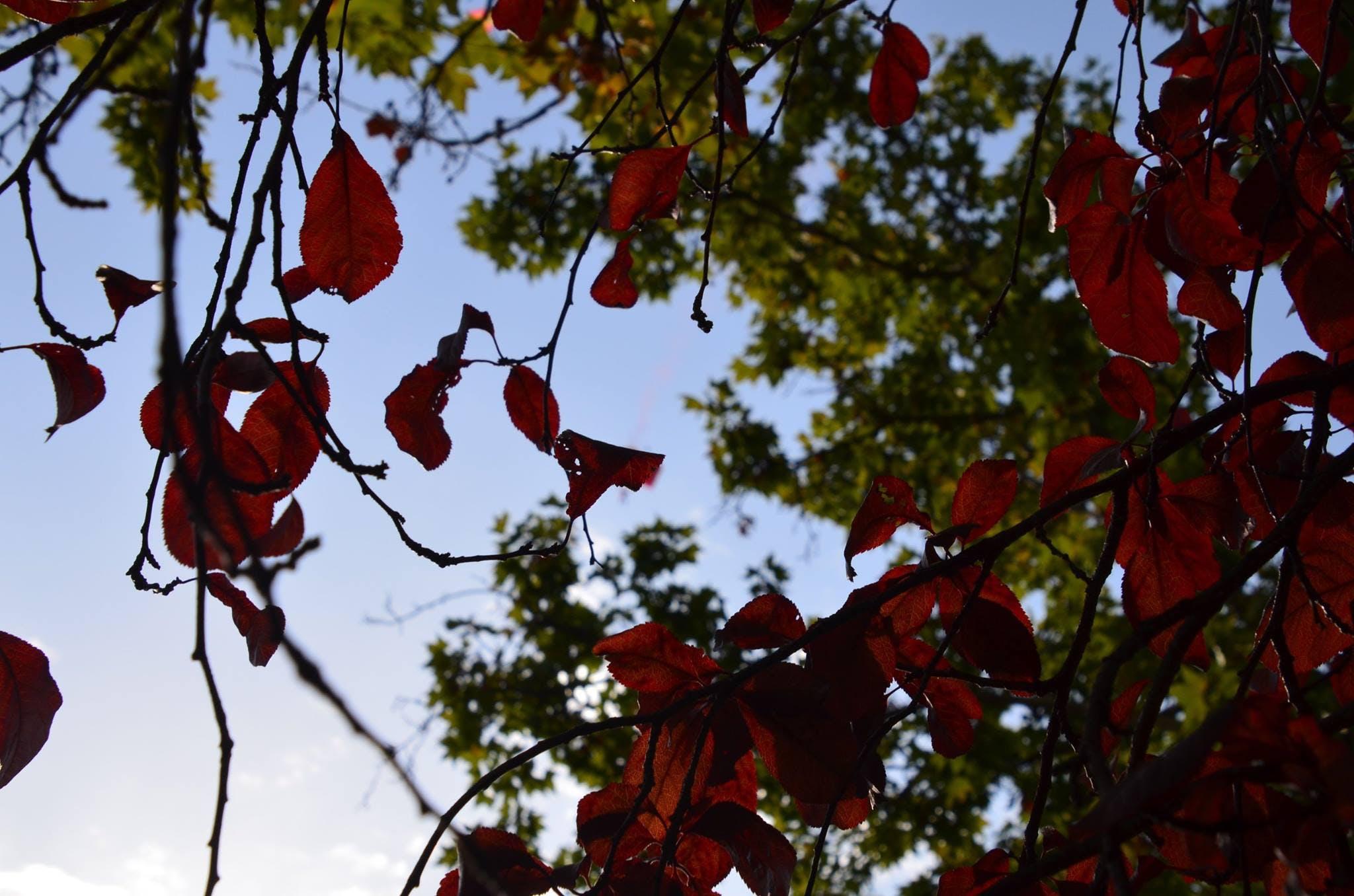 Free stock photo of hojas, otoño
