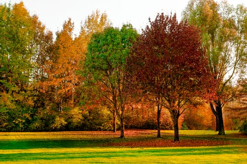 Green and Red Leafed Trees