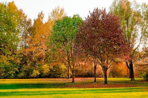 Kostenloses Stock Foto zu bäume, gras, jahreszeit, landschaftlich
