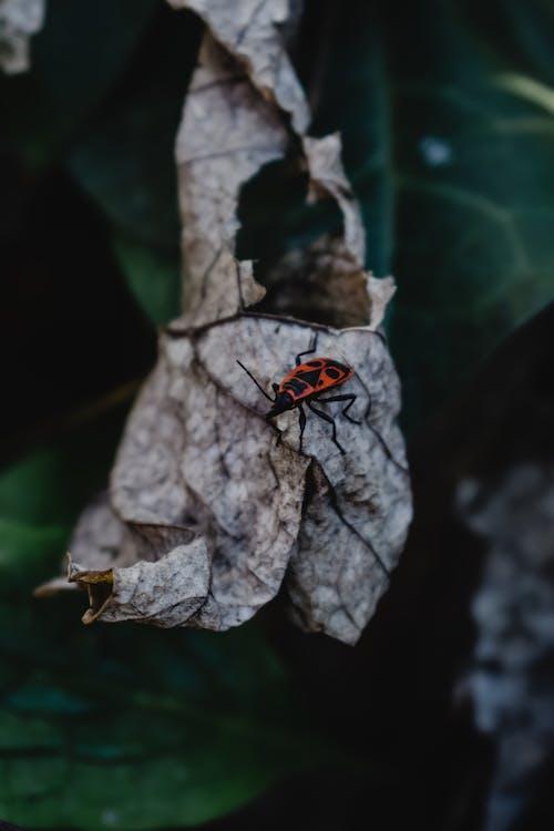 白色和绿色的叶子上的红色和黑色的虫子