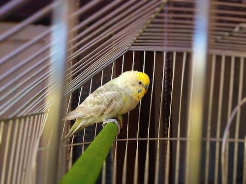 Ilmainen kuvapankkikuva tunnisteilla canario, kaunis, keltainen, luonnollinen