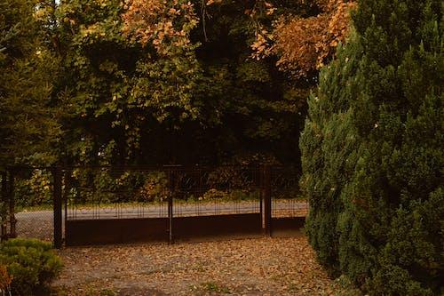Imagine de stoc gratuită din grădină, portocală, sat