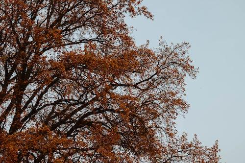 Photos gratuites de arbre, automne, branches, environnement