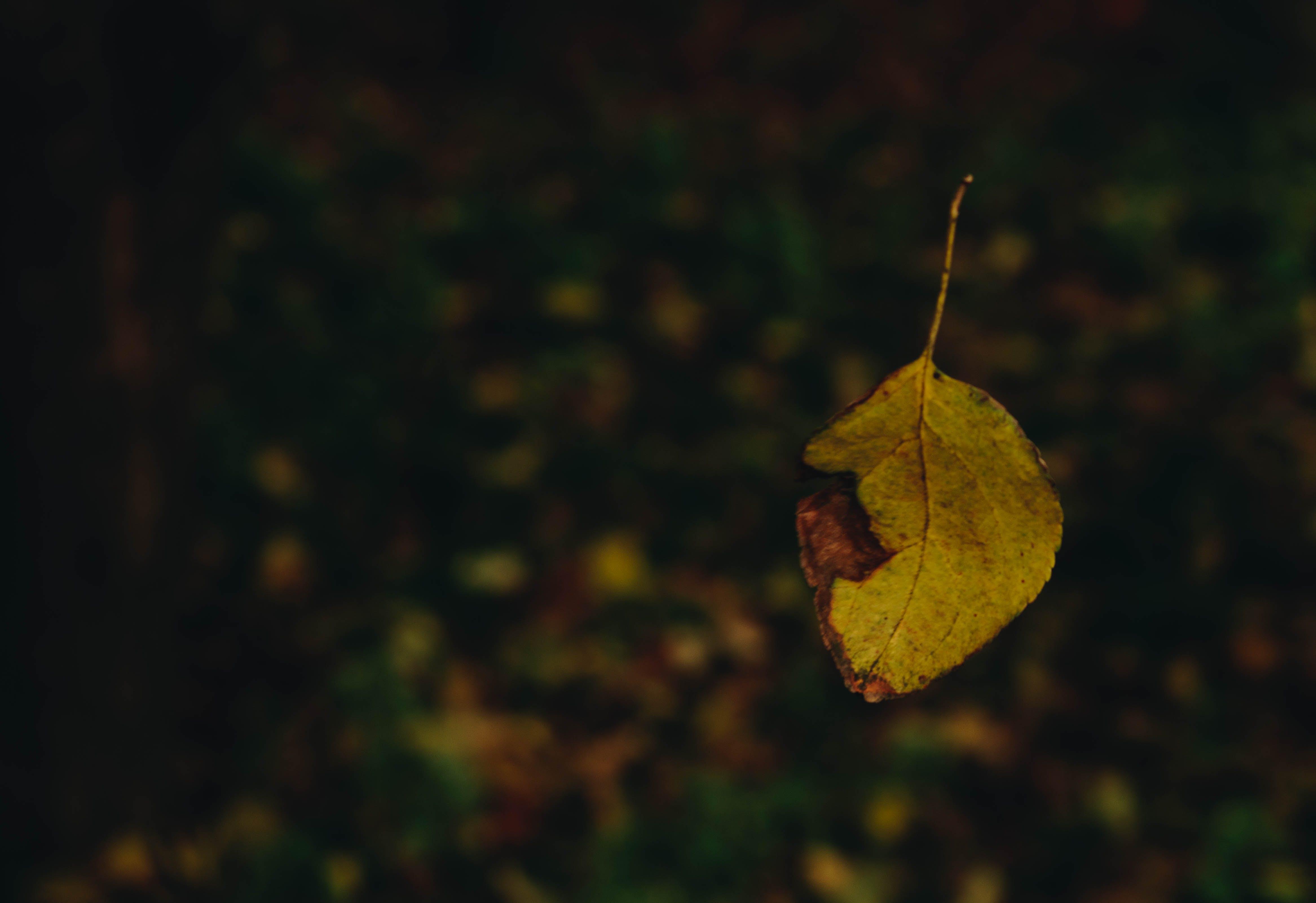 Free stock photo of autumn mood forest, levitate, orange, yellow