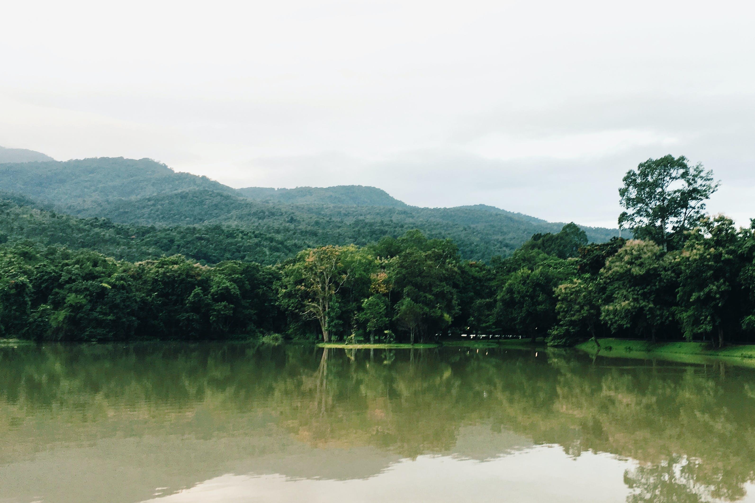 Foto stok gratis air, alam, awan, berkabut