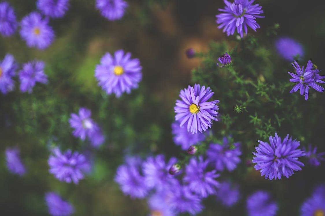 건초지, 계절, 꽃