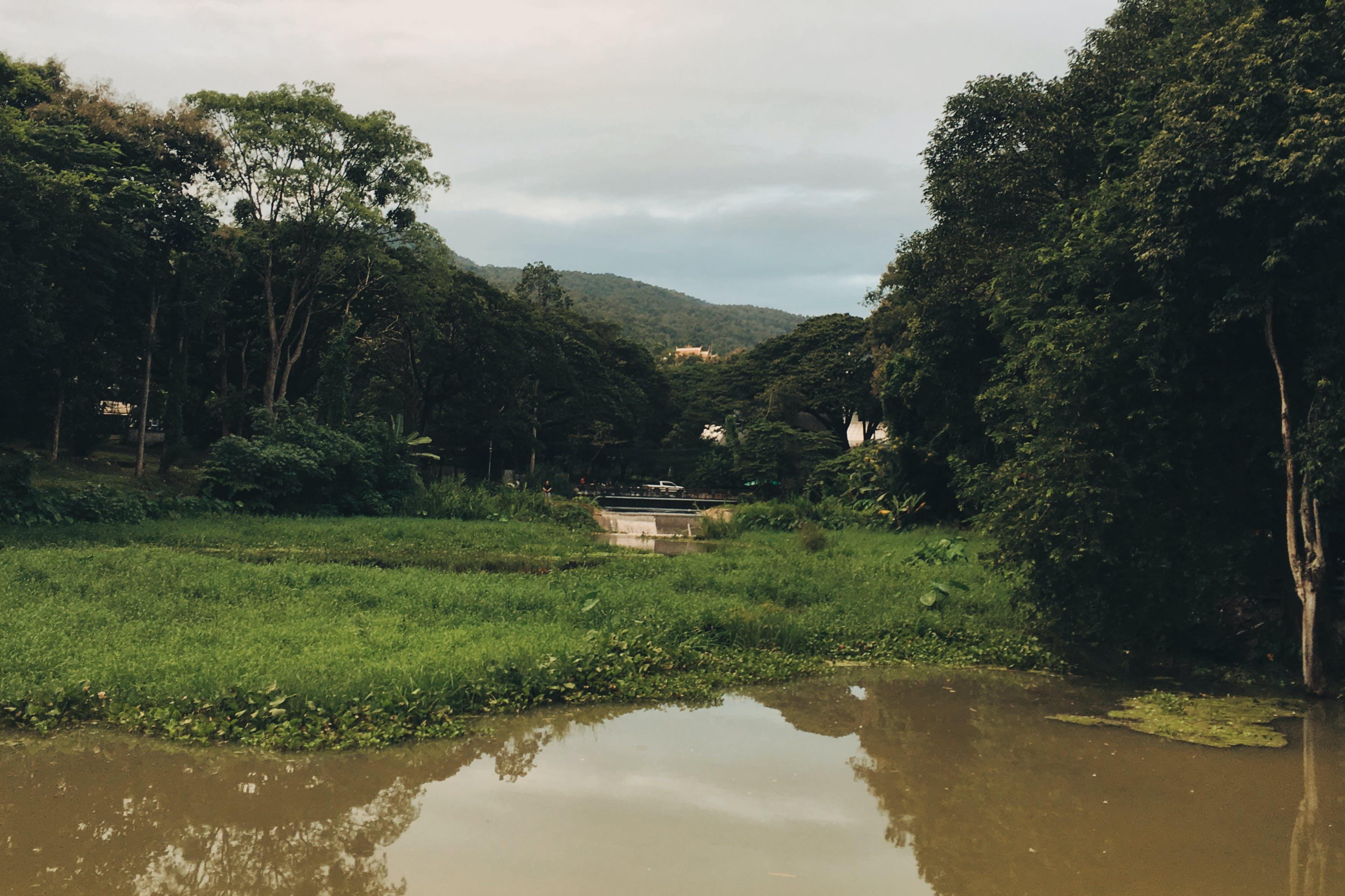 Kostenloses Stock Foto zu bäume, berg, flussufer, natur