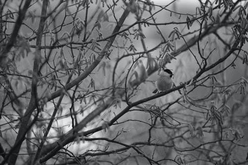 Grayscale Photo of a Bird Perched on a Tree Branch