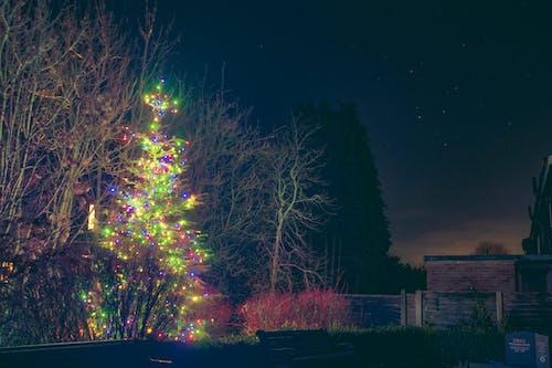 Immagine gratuita di albero, cielo, cielo notturno