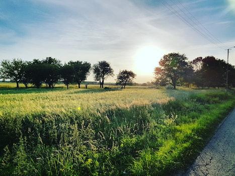 Free stock photo of sky, field, sun, trees
