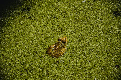Toad sitting in green swamp