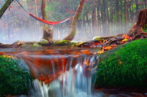 Безкоштовне стокове фото на тему «4к, вода, водоспади»