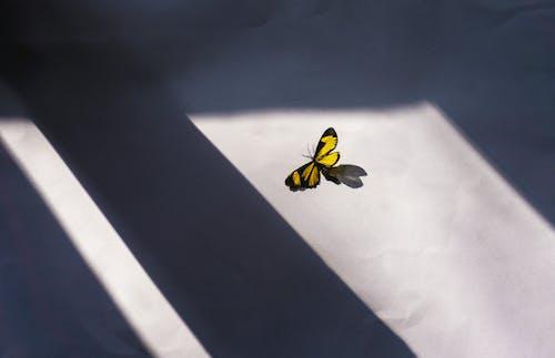 Безкоштовне стокове фото на тему «абстрактний, вікно, вітер»