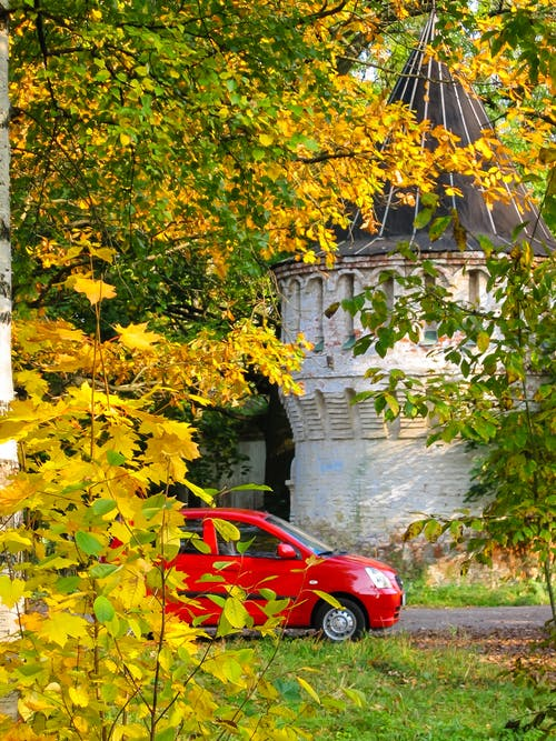 Free stock photo of automobile, car, fall  leaves, plant