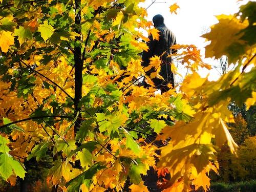 Free stock photo of fall  leaves, plant, season, texture