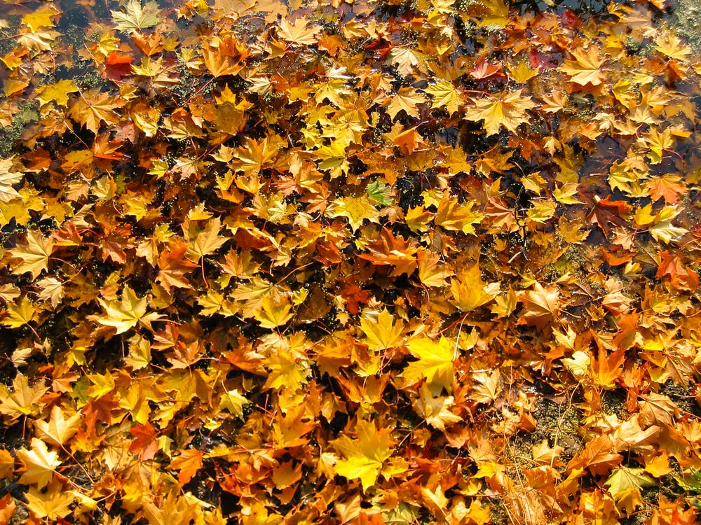 Brown and Beige Leaves on Ground