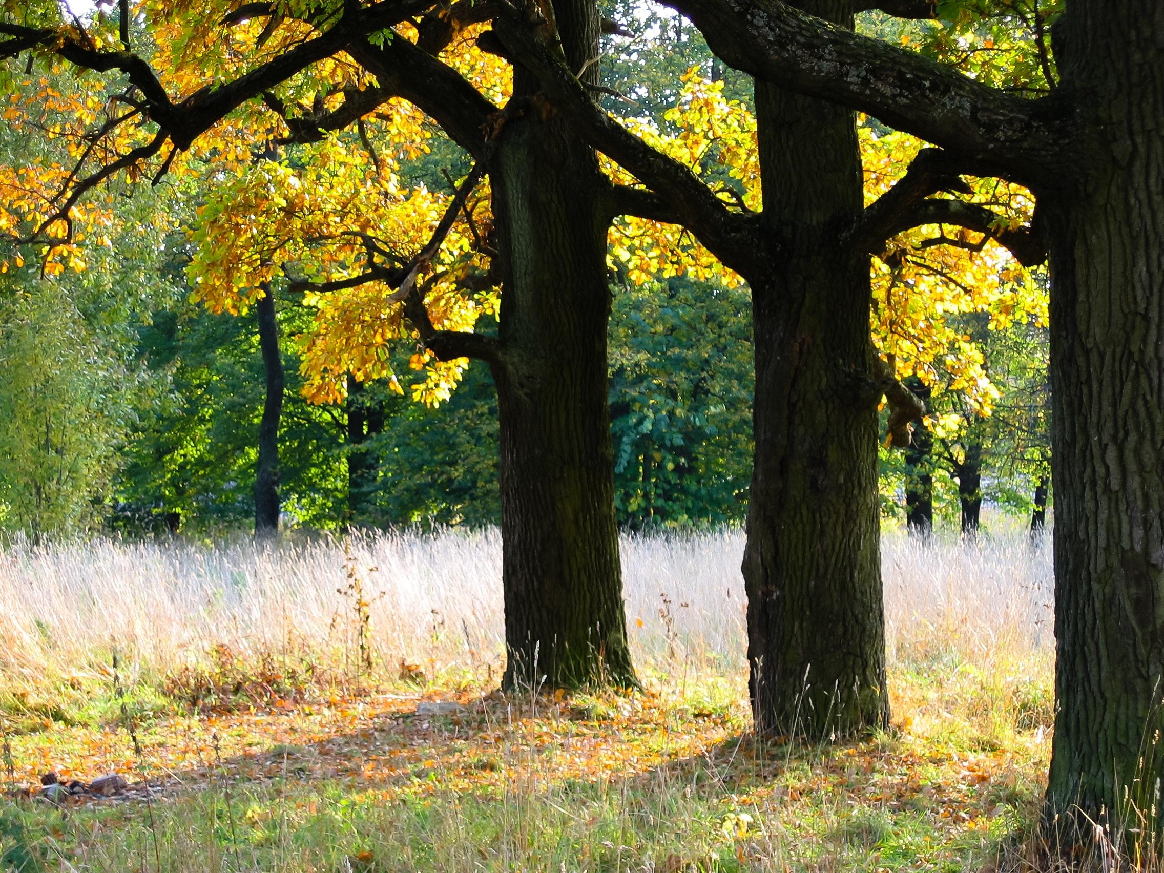Free stock photo of autumn, autumn colours, fall leaves