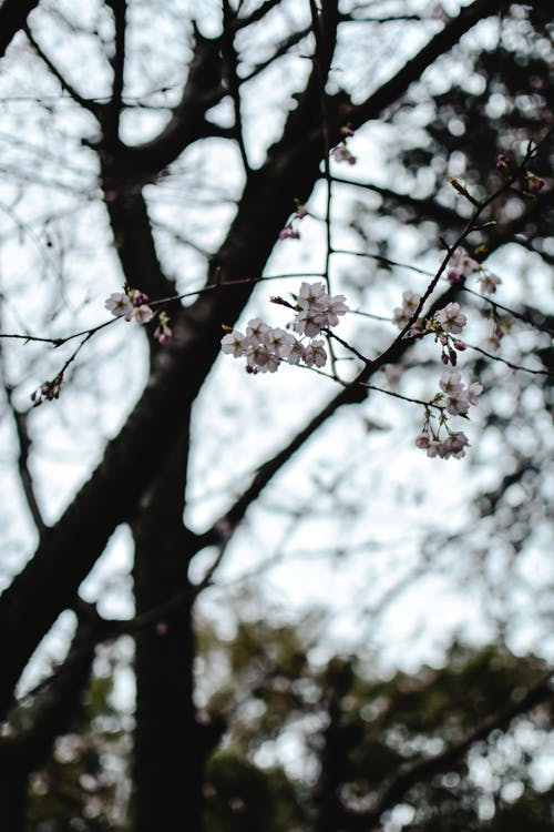 Blossoming sakura branches in forest in daylight