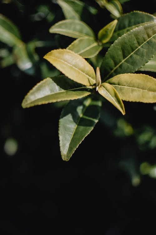 Free stock photo of close up, flora, green leaves