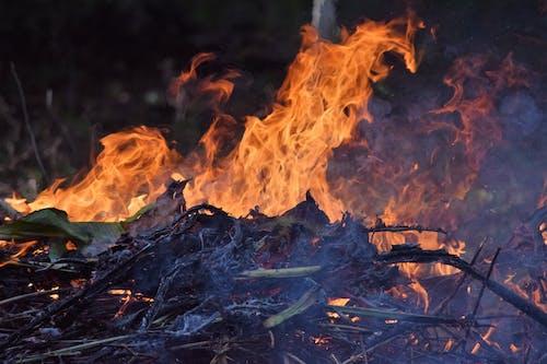 Free stock photo of burned, chama, fire
