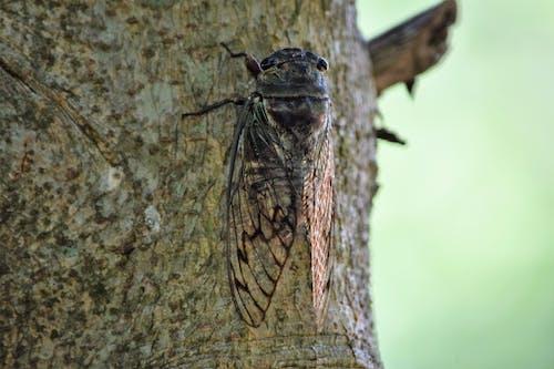 Free stock photo of bug, caule, cicada