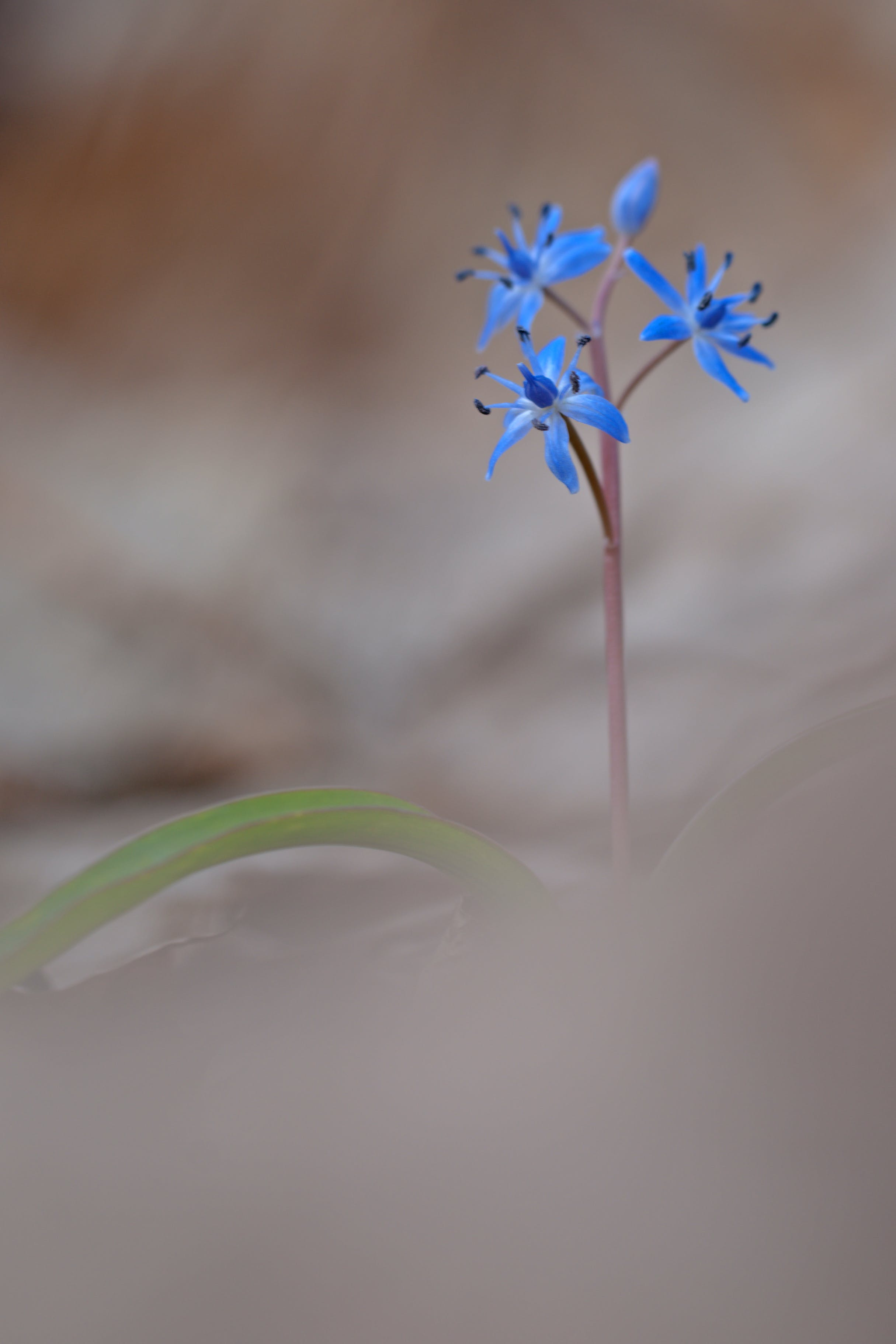 Blue Small Flowers in Bokeh Photography