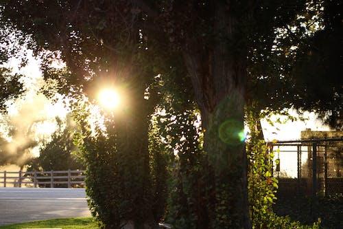Free stock photo of forest, light, sun light