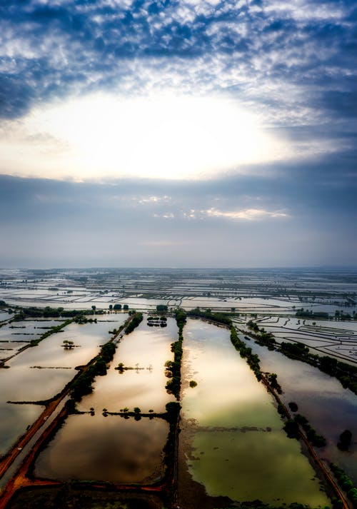 Wet agricultural rice fields with plants located in rural terrain against cloudy sky with horizon line in countryside in summer time