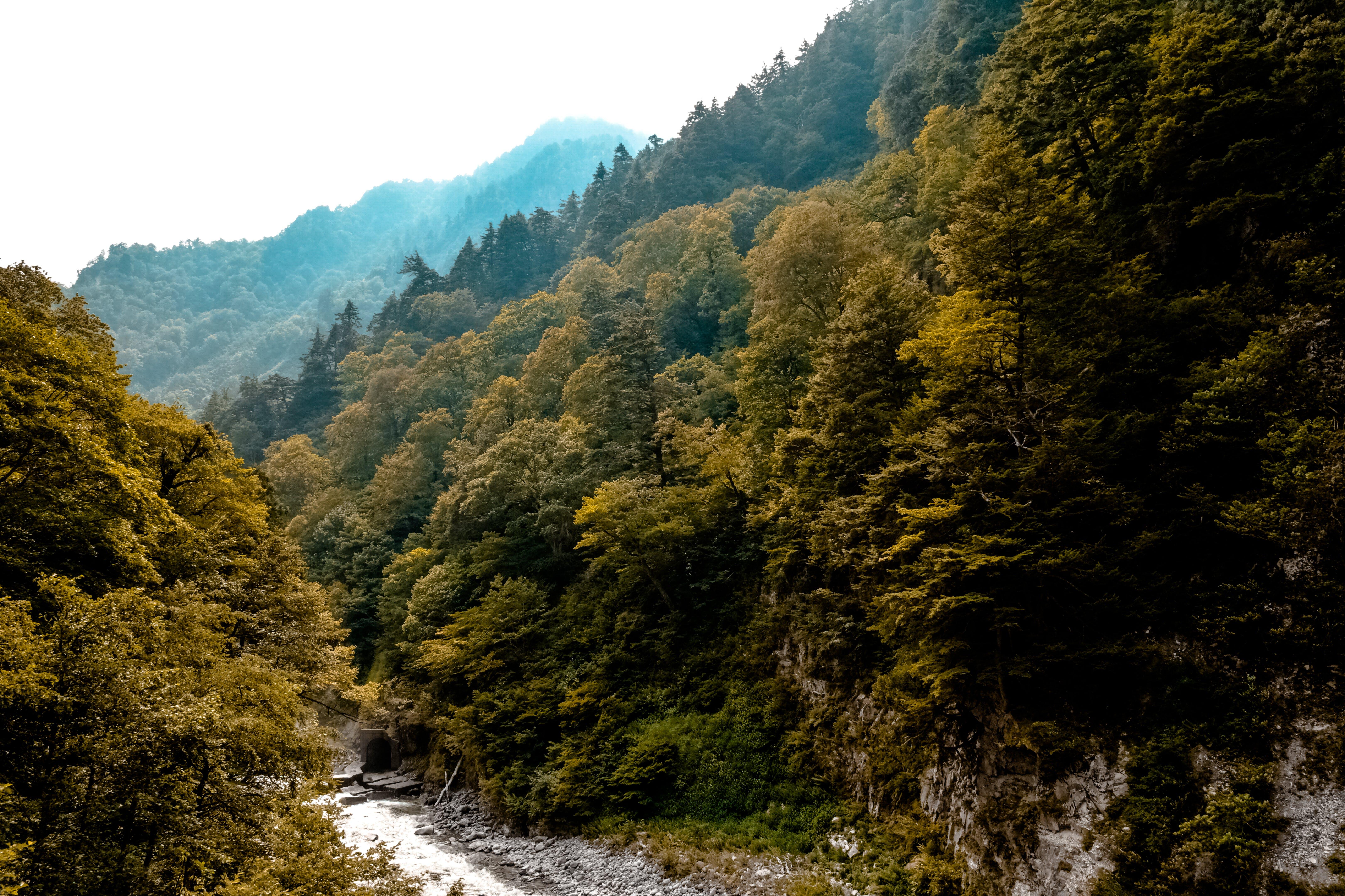 zu bäume, berge, landschaft, natur
