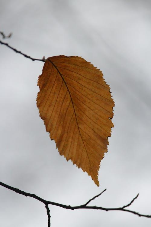 Kostnadsfri bild av blad, falla, flora