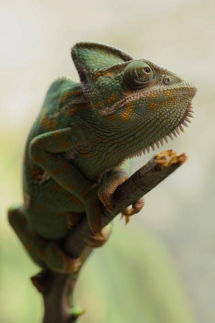 Animal green reptile female