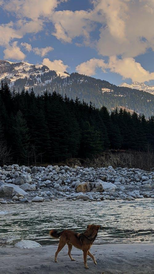 Free stock photo of beautiful sky, bernese mountain dog, blue mountains