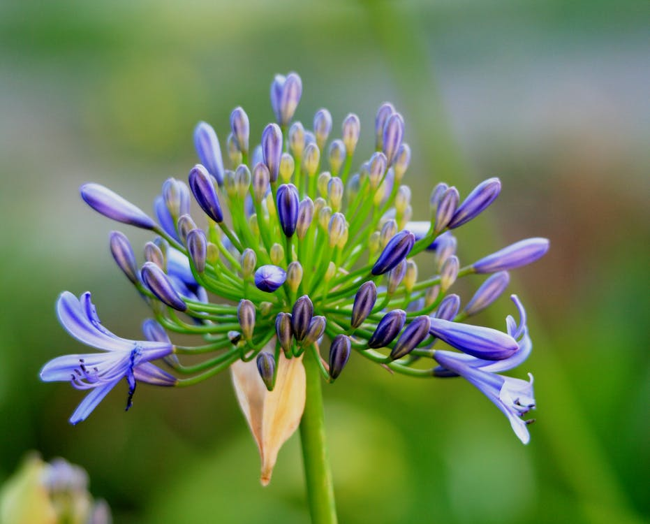 Blue and Green Flower