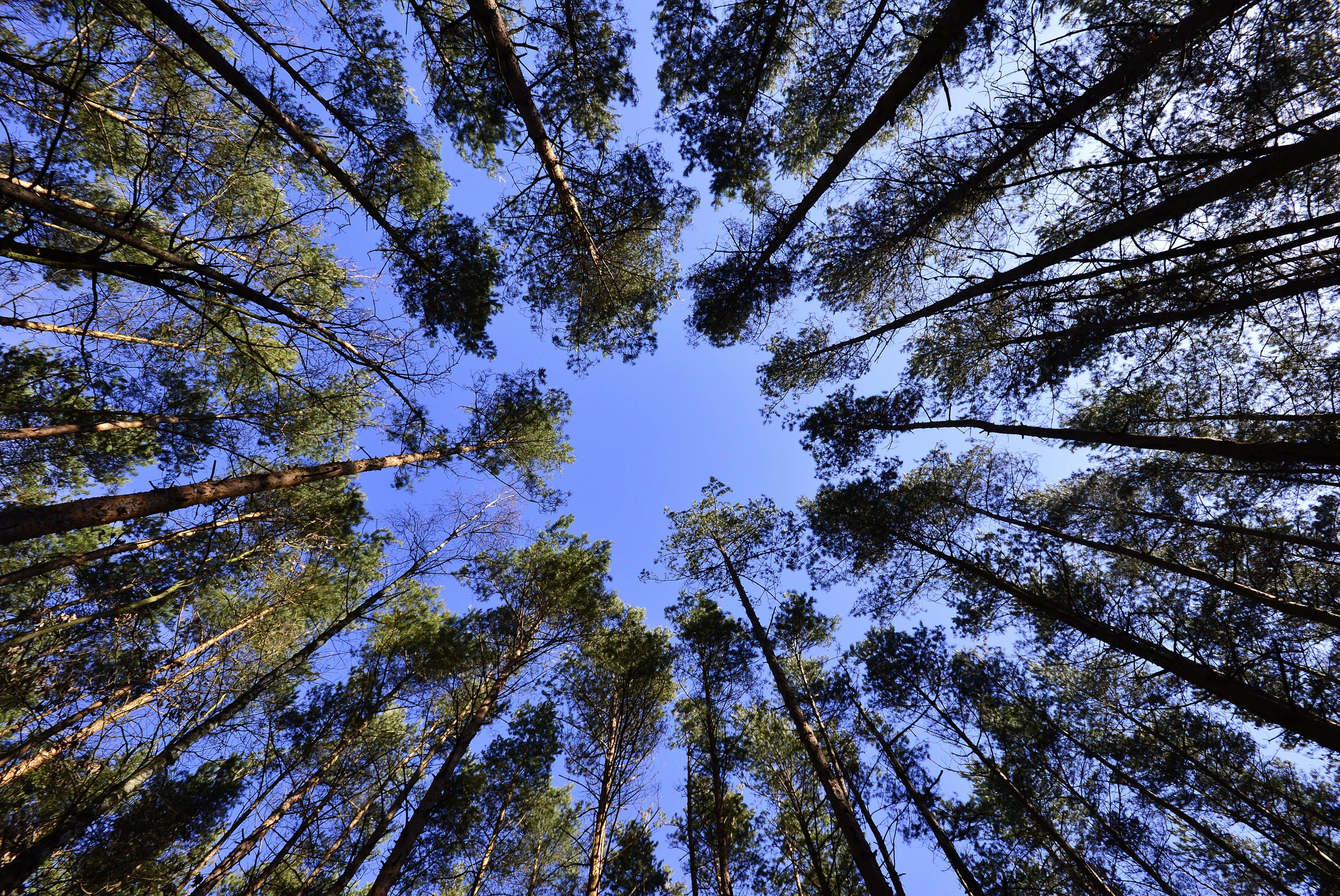 Základová fotografie zdarma na téma les, obloha, perspektiva, příroda