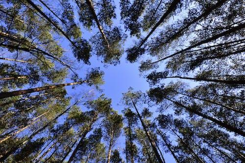 Foto d'estoc gratuïta de arbres, bosc, cel, contrapicat