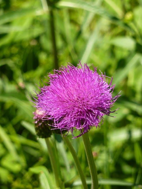 New free stock photo of flower, macro, bloom