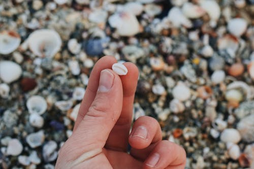 Close-Up Shot of a Person Holding a Seashell